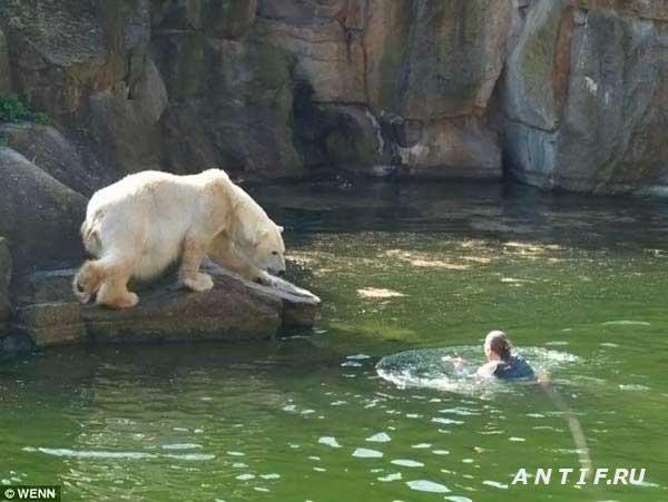 Женщина попала в вольер с медведями